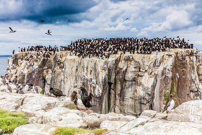 Farne Islands, Northumberland