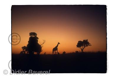 Kenya Mars 87 ©Didier Baverel