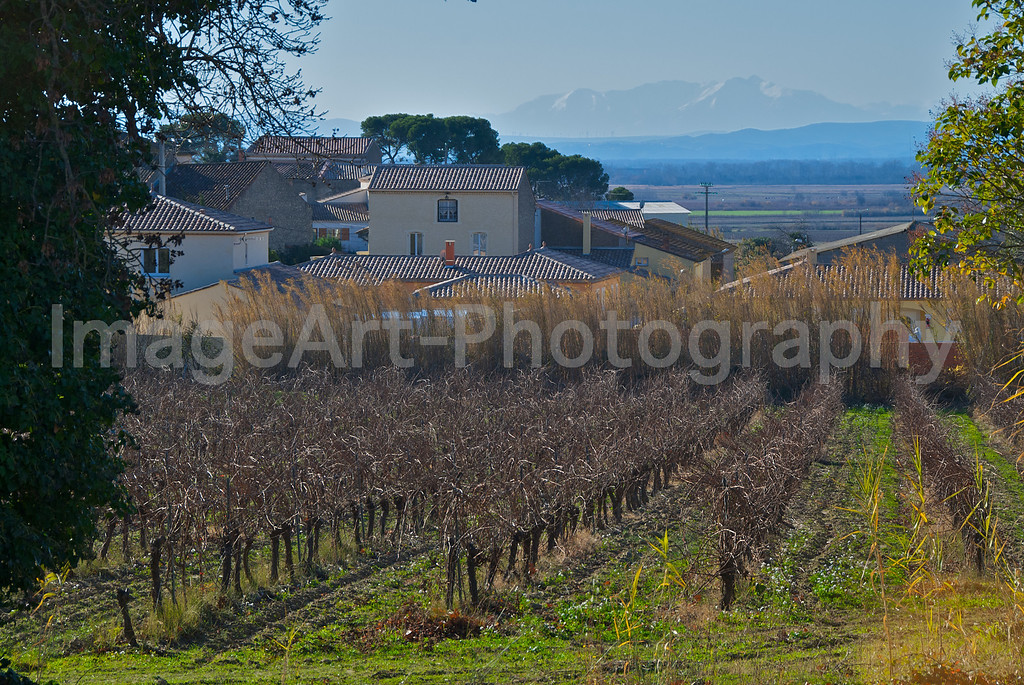 Farmhouse, vines and view of the Pyrenees