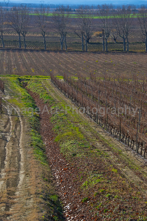Vines and fields in winter in France
