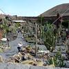 A view at Jardin de Cactus in Lanzarote, Canary Islands.