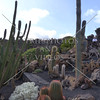 A view of Jardin de Cactus in Lanzarote, Canary Islands.