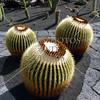 Cactus at Jardin de Cactus in Lanzarote, Canary Islands.