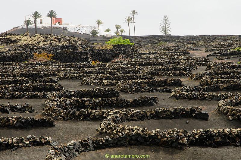 Gería, cultivos típico de Lanzarote