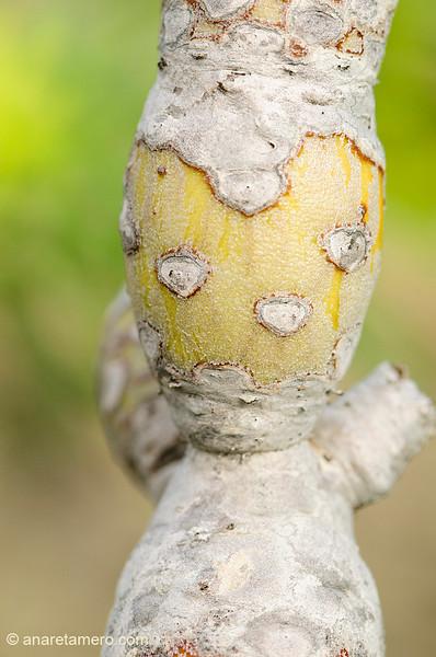 Figurilla en tronco de verode