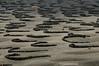 Gería. El picón (arenas volcánicas) debido a su porosidad almacena el agua del rocío, las rocas, dispuestas en formas de media luna, protegen del viento del norte