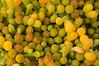 Uvilla de mar (<em>Zygophyllum fontanesii</span></em>)