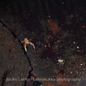 Sokeat ravut - Blind Crabs