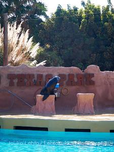 Merileijonashow - Sealion show at Rancho Texas