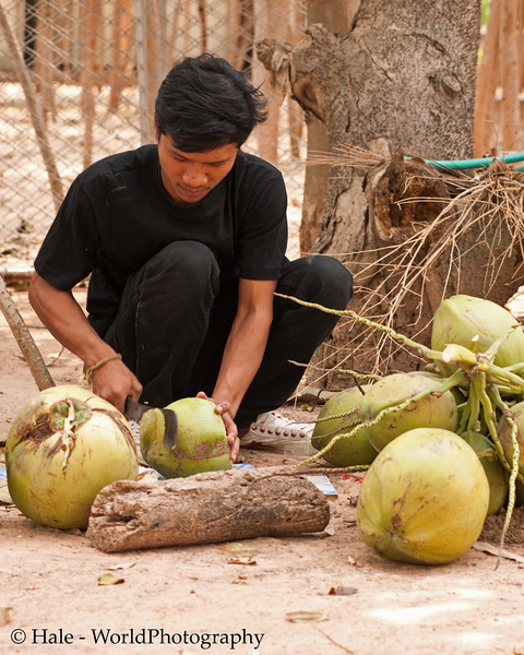 Preparing to Extract Coconut Water For Washing the Corpse