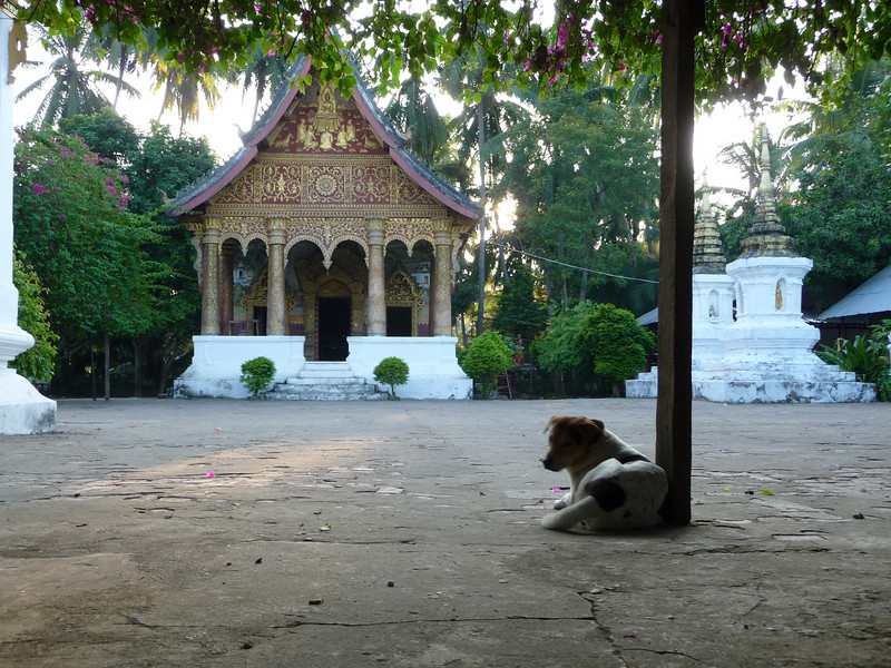 doggie at Wat Pa Phai