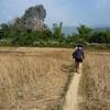 walking through Vang Vieng rice paddies