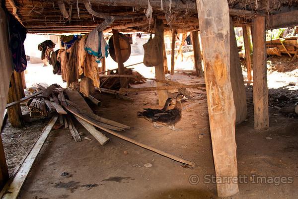 Ducks under house