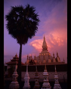 Sunset and palm over Wat in Vientiane, Laos