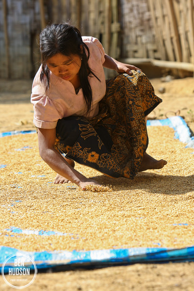 Woman drying rice, village outside Luang Prabang, Laos