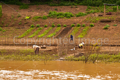 Farming along the Mekong River