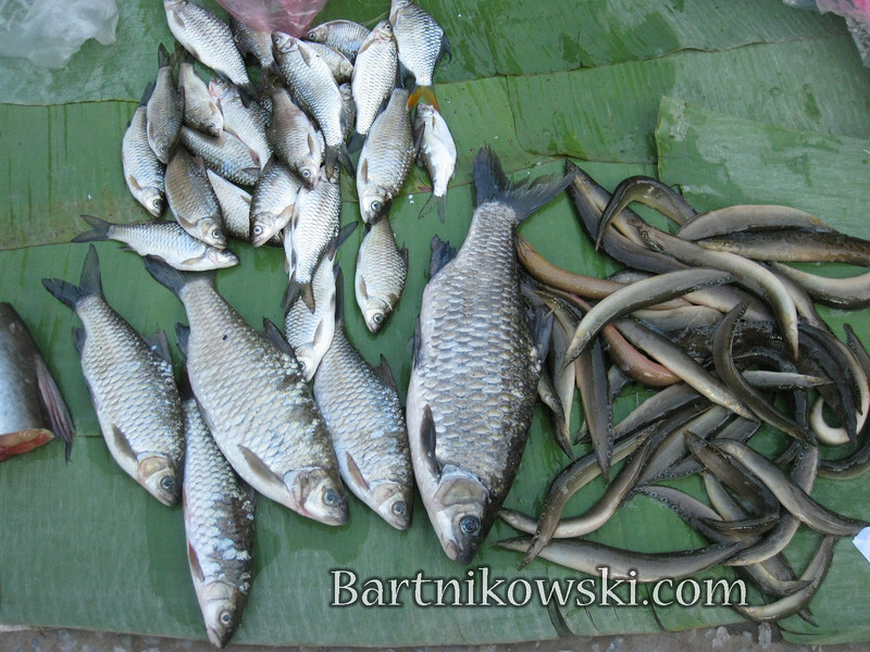 Fresh Fish and Eel in Luang Prabang, Laos