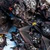 Live bats