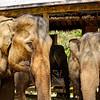 Elephant Village Camp Holding Pens