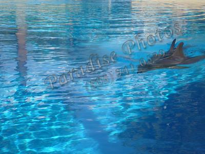 Dolphin LasV 0609