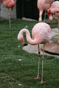 Flamingo at the Flamingo Casino