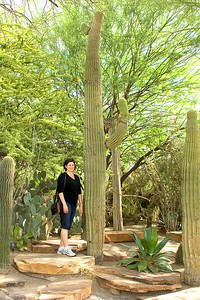 The Botanical Cactus Garden is right outside the chocolate factory.  It has over 350 species of cactus and desert plants from the Southwest and other deserts of the world.