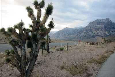 Red Rock Canyon 03