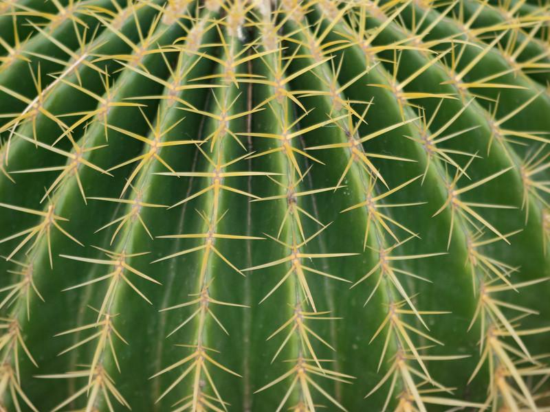 Cleveland Cactus I