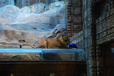 DSC_0523 - MGM Lion habitat.