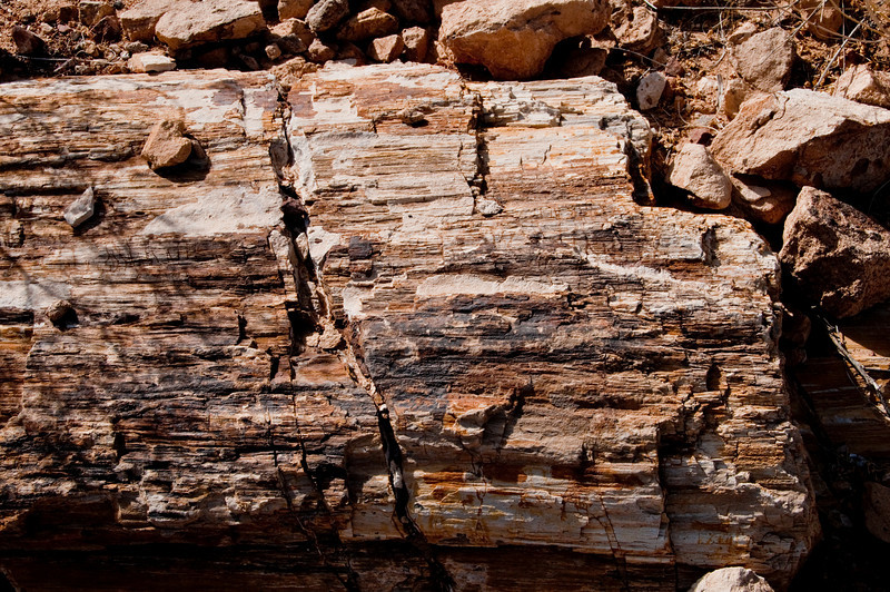Valley of Fire Nevada State Park - Petrified log