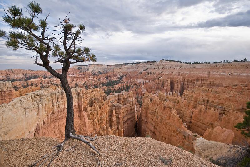 Afternoon at Bryce Canyon, Utah