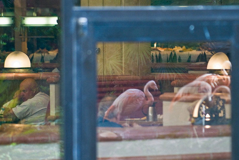 Reflection of the Chilean Flamingos in the Flamingo Hotel restaurant.