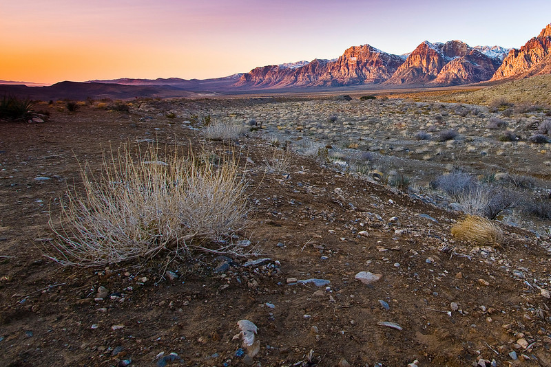 Tumble Weed and an early morning at Red Rock Canyon