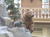 Bear at Sam's Town