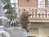 Bear at Sam's Town