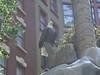 Bald Eagle at Sam's Town