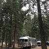Big trees, little trailer