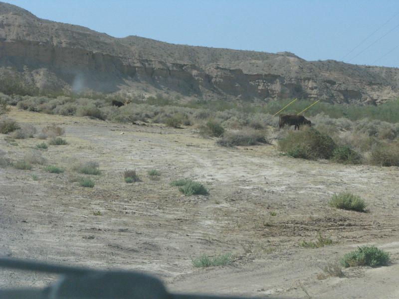A few head of cattle's were along the way.