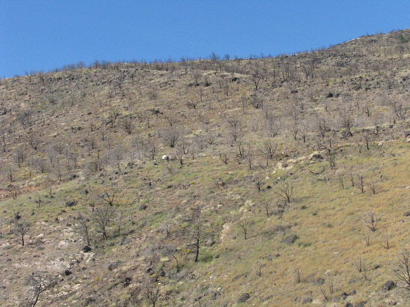 BLM1069(Co, RD 5) climbs through a burn area, Mother Nature is in the process of recovering.