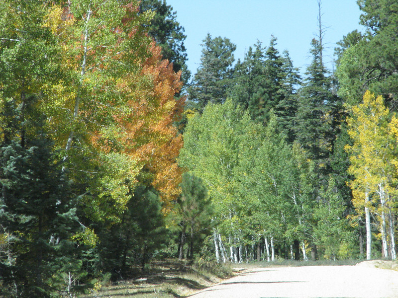 As FR22 moves to lower elevation the aspens are thinning out.