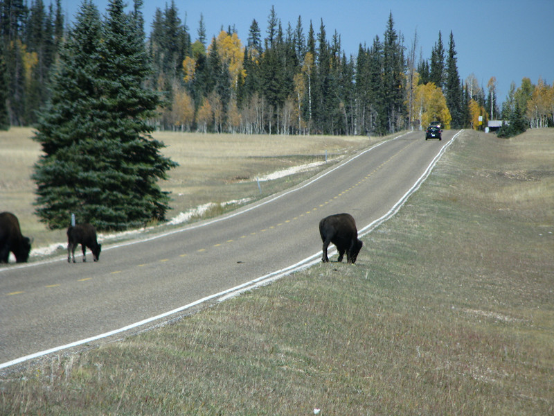 Hairy beasts showing who control the road. The NP entrance is up ahead.