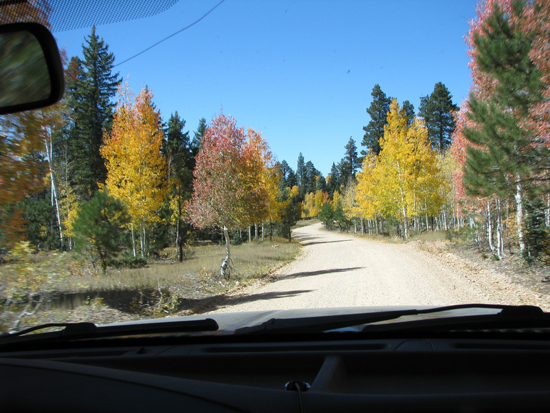 Quaking Aspens line FR22 as we drove by.