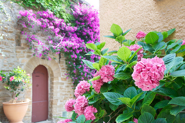 Flowers during a quick walk through Bormes les Mimosas, another pretty village along the coast