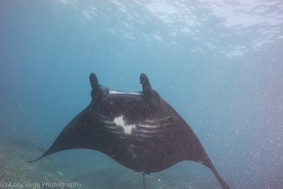 Last Dive Day in Bali Mola Mola Manta Fest
