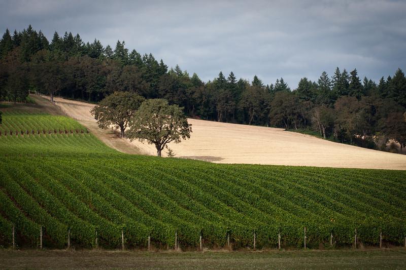 @ Stoller Vineyards in the Willamette Valley