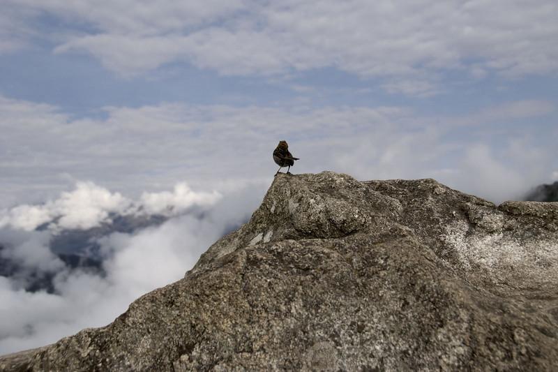 Machu Picchu, the top of Huayna Picchu and a fellow adventurer!