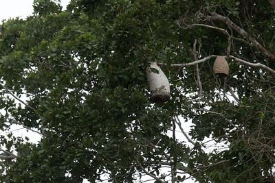 Wild bee hives.