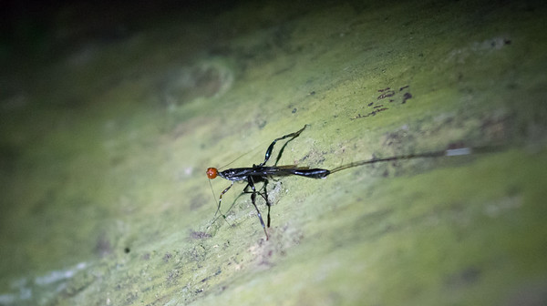 Mayfly-type insect