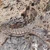 find the lizard