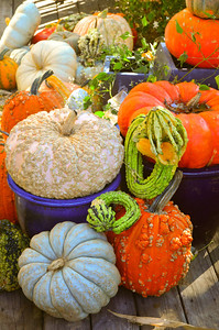 Gourds & More